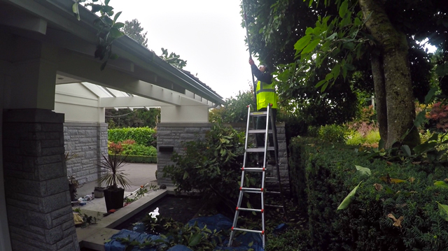 Landscaping Maintenance and Tree services