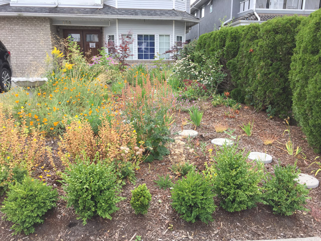 Click here to go to Viscount Native plant garden.
